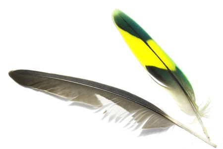 Green and yellow and grey feathers with white background Stock Photo