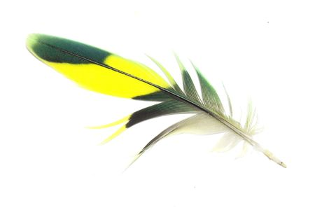 Green and yellow feather with white background