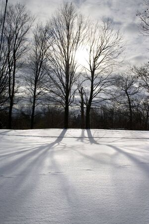 Naked trees with long shadows at the snow on sunset 2
