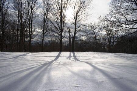 Naked alberi con lunghi ombre sulla neve al tramonto 1  Archivio Fotografico - 2274324