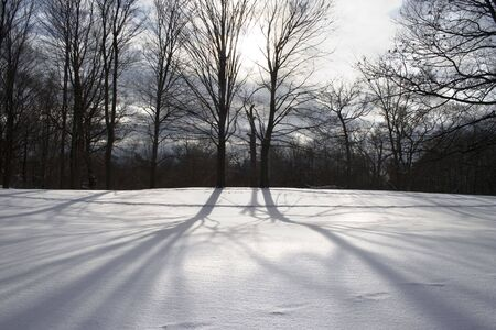 Naked trees with long shadows at the snow on sunset 1