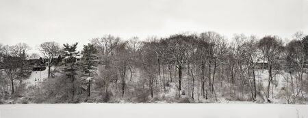 Lace winter trees at iced lake shore in High Park of Toronto Stok Fotoğraf