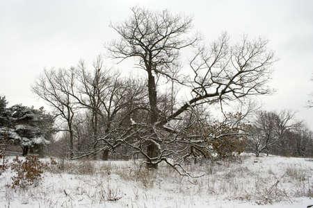 high park: Merletto d'inverno gli alberi in alta Parco di Toronto