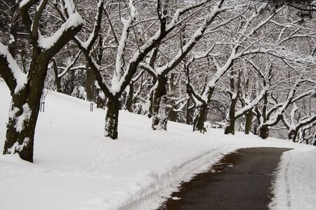 walking zone: Lace winter trees in High Park of Toronto Stock Photo