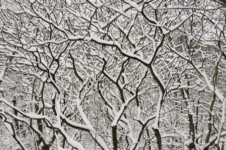 Lace winter trees in High Park of Toronto Stock Photo - 2487482