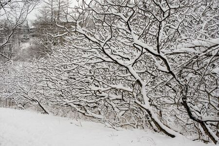 Lace winter trees in High Park of Toronto Stock Photo - 2487479