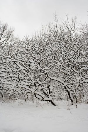 rural scene: Lace winter trees in High Park of Toronto Stock Photo