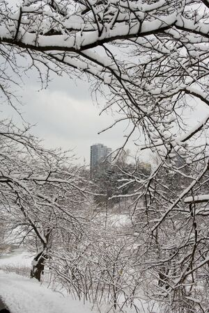 walking zone: Frame of lace winter trees for condo building in High Park of Toronto