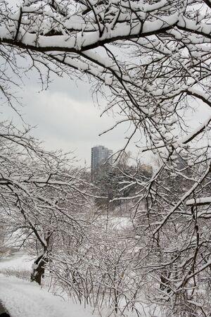 high park: Quadro di pizzo inverno alberi per la costruzione del condo in Alta Park di Toronto