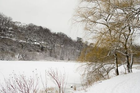 Winter lakeshore view with naked snow-covered trees Stock Photo - 2487468