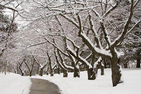high park: Pizzi in inverno gli alberi ad alto Park di Toronto
