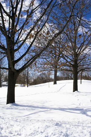 Naked trees in winter at the snowed field Stock Photo - 2725474