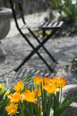 Small garden with blossoming flowers and garden chair