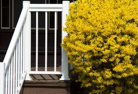 White porch and yellow blossoming bush