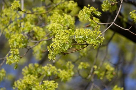 Spring young leafs at the trees branches Stock Photo