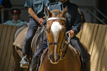 Royal Canadian Mounted Police, police horses parade in Toronto, Canada