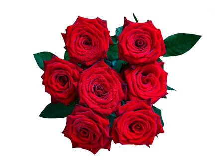 beautiful Burgundy roses of Dutch variety Red Naomi with dew drops on a white background isolated