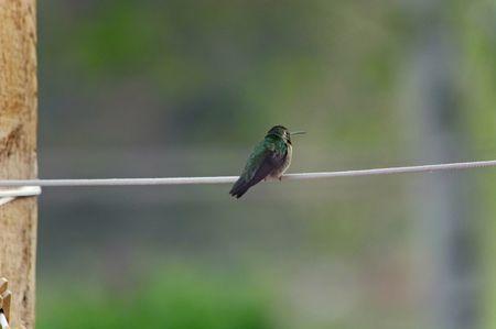 clothesline: Hummingbird Sitting on Clothesline