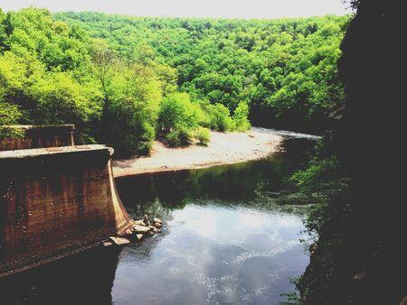 緑豊かな森を流れる川 写真素材 - 79189103