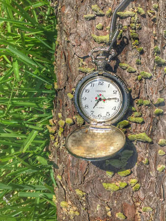 limb: Pocket watch setting on a tree limb on the grass