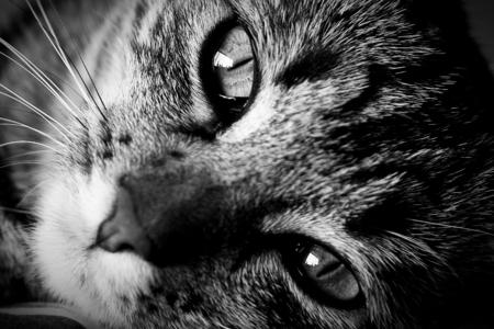 feline: Feline Company Stock Photo
