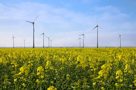 Wind Turbines in Lincolnshire in a yellow rape field photo