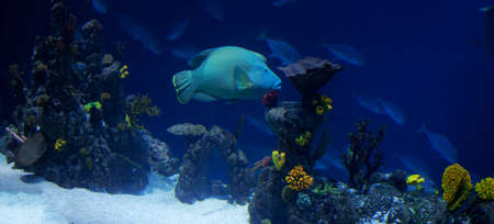 A panorama of a coral reef with many fish photo