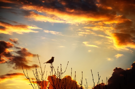 Bird flying into the sunset singing against a spectacular sunset Standard-Bild