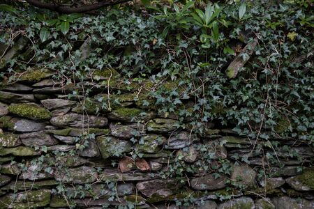 An overgrown dry stone wall photo