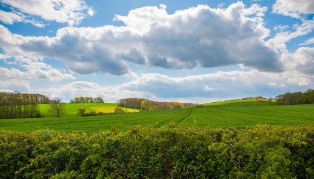 view of a hedge in the linconshire wolds photo