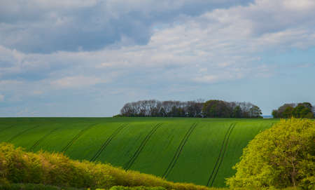 Green fields in linconshrie with crops growing photo