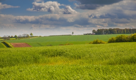 Green fields in linconshrie with crops growing and sky photo