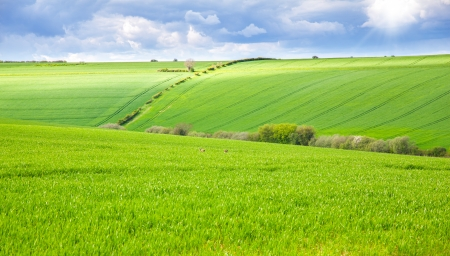 Green field with rabbits running wild photo
