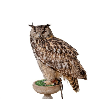 Eagle owl isolated on white Standard-Bild