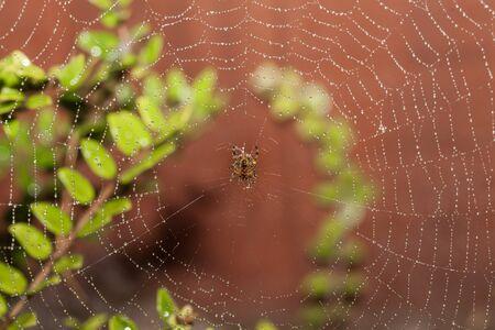 dewey: Spider on a dewey web