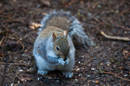 Squirrel eating a nut on ground photo