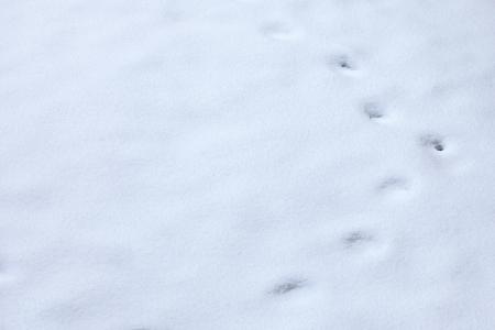 animal tracks: invernali Animale tracce nella neve
