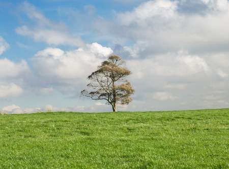 single tree in peak district photo