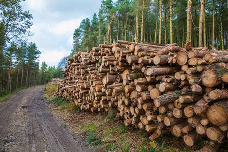 Logging in Derbshire Dales UK photo