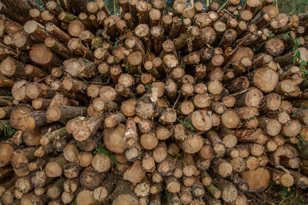 dales: Logging in Derbshire Dales UK
