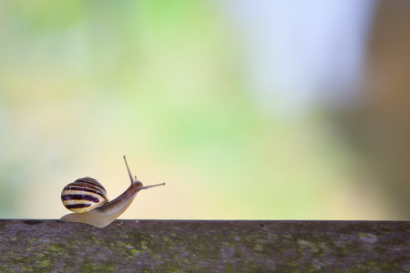land slide: White lipped snail on a wooden fence, Stock Photo