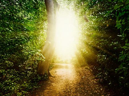 muerte: Camino de bosque en el bosque