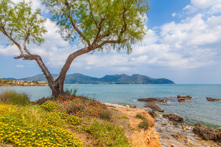 cosatal flowers in cala bona majorca Stock Photo