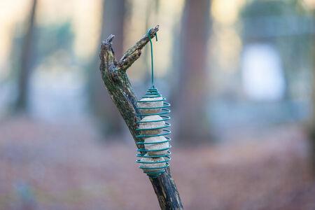 fat bird: Fat ball bird feeder in a branch