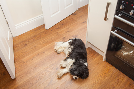 Dog asleep on teh kitchen floor Stock Photo