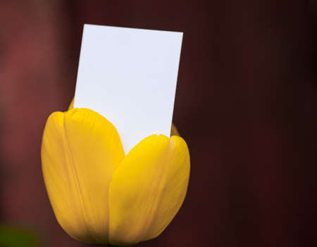 businesscard: Blank business crd emerging from a tulip Stock Photo