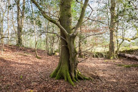 companion: husband and wife or companion tree in forest