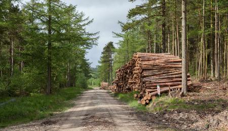 logging: logging industry in yorkshire uk Stock Photo
