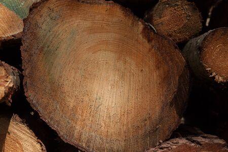 logging industry: logging industry in yorkshire uk Stock Photo