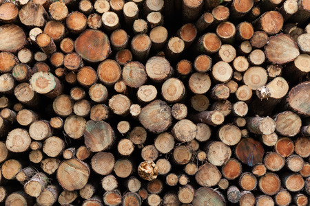 logging industry in yorkshire uk Stock Photo